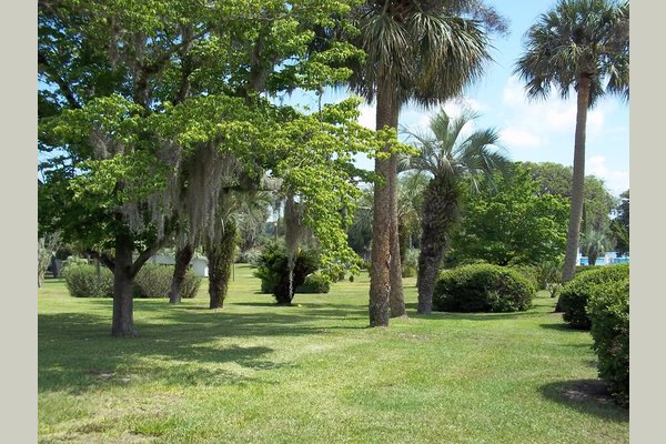 Park of the Palms 100829