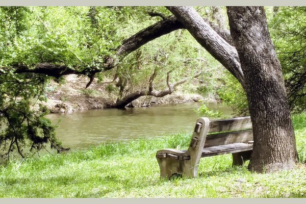 There is no other community where you can walk along the Salado Creek while you explore nature, see owls, hawks, egrets, deer, as you listen to the rippling of the water, it is gorgeous.